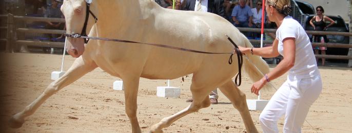 Rencontres Équestres Méditerranéennes de Beaucaire